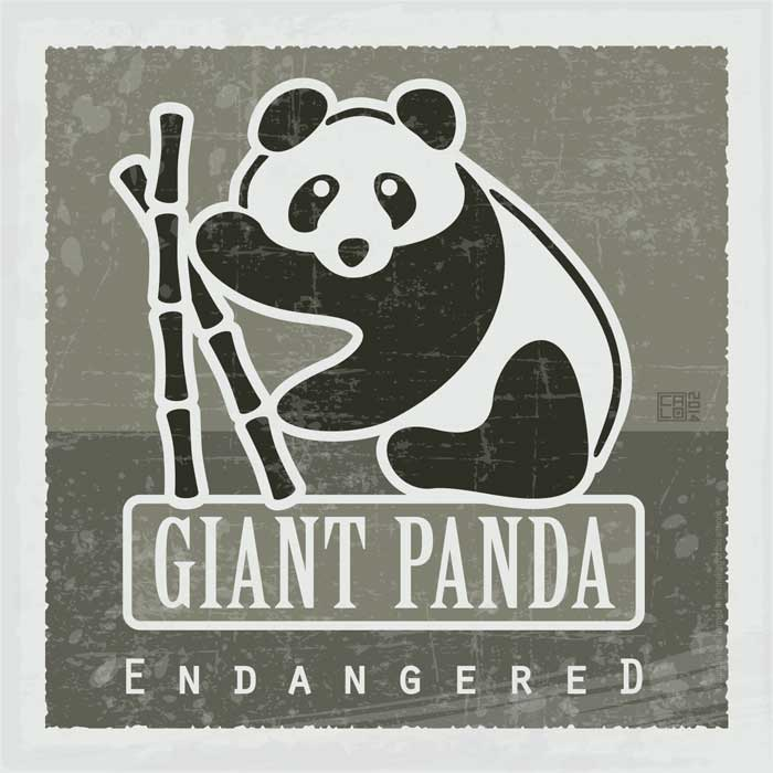 Giant Panda - Endangered | Poster | Square