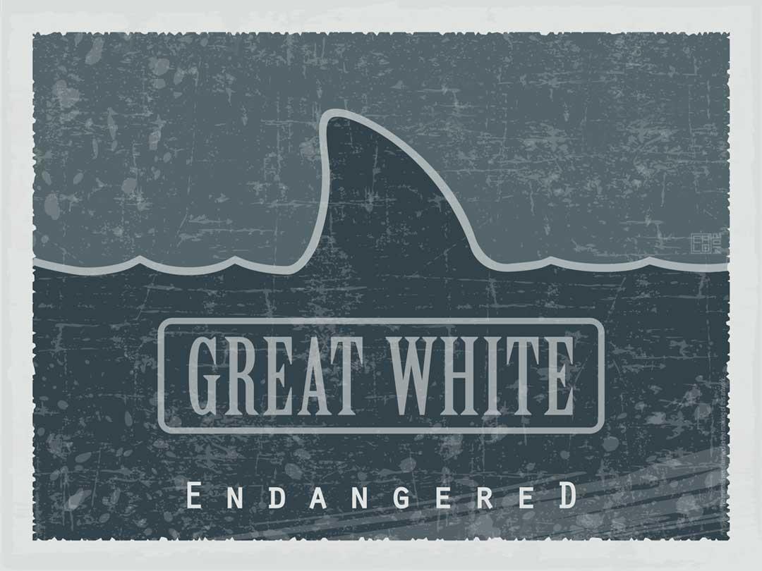 Great White - Endangered   Poster   Inside Gallery