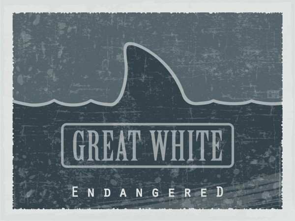 Great White – Endangered