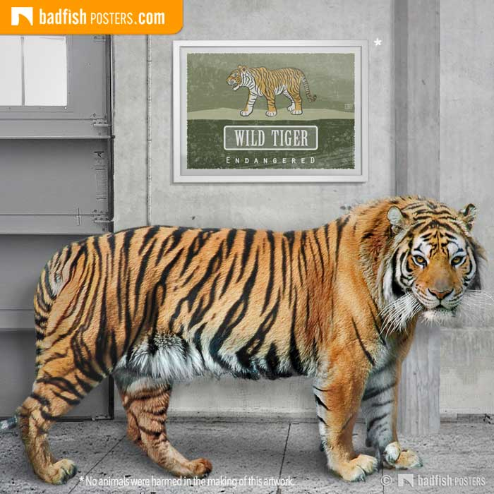 Wild Tiger – Endangered